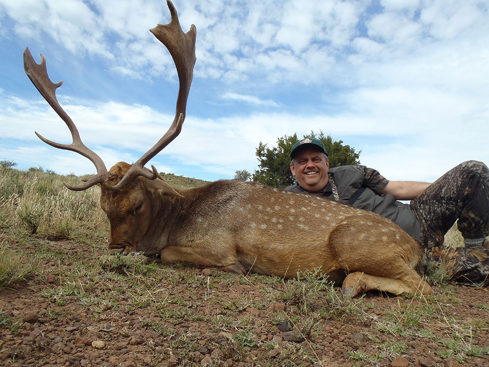 Fallow-Deer-Plains-Game-Hunting-Packages-South-Africa.jpg