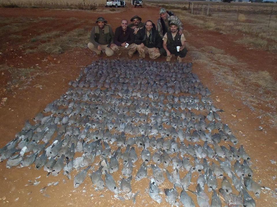 High-Volume-Bird-Hunting-Safaris-in-South-Africa.jpg