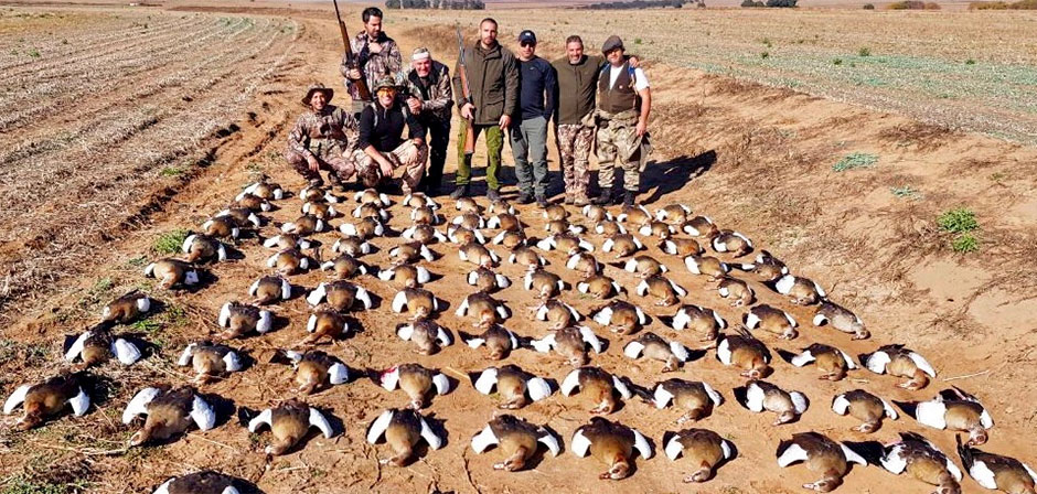 Goose Hunting in Africa | Spur Wing Geese and Egyptian Geese